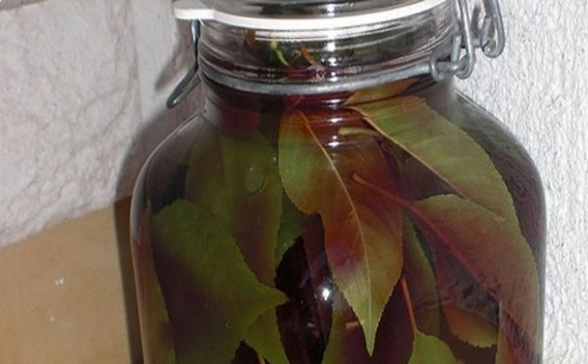 hojas-de-cereza