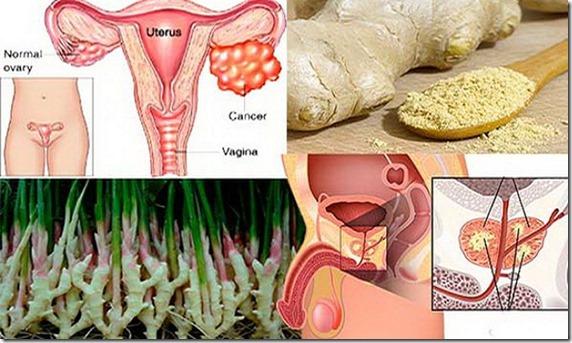 jengibre y cancer
